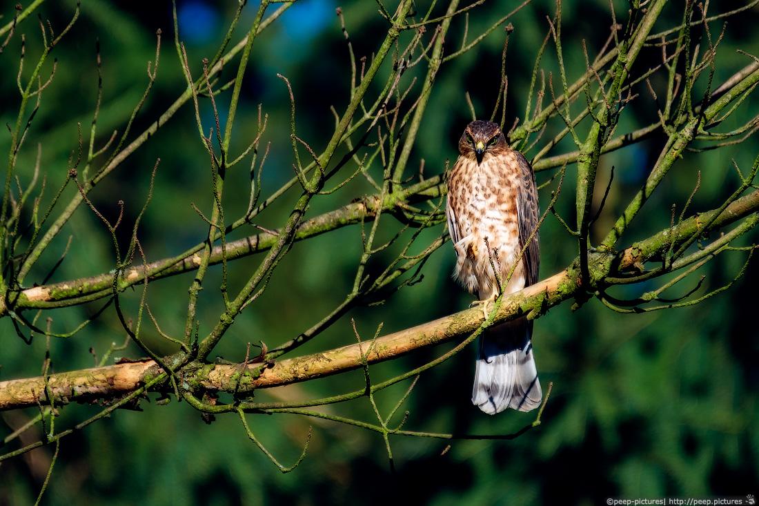https://img.ewelt.org/pics/upashi/Tiere/Birds/2018/20160719_084558_Pro2_6371-Edit.jpg