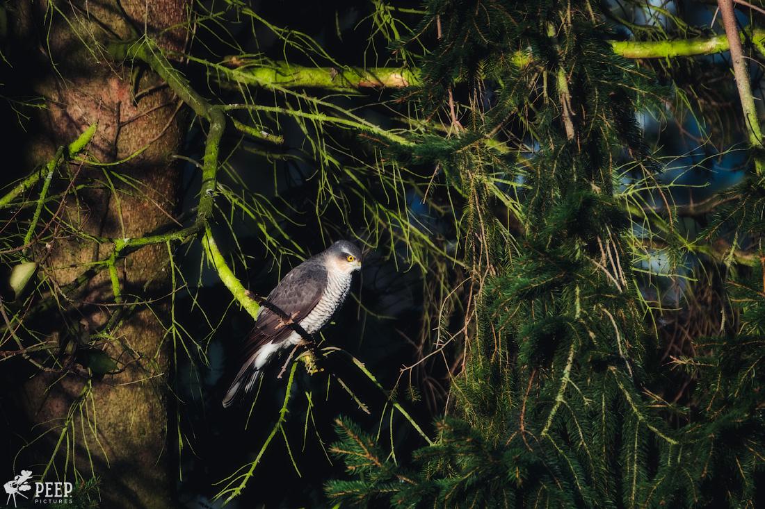 https://img.ewelt.org/pics/upashi/Tiere/Birds/2018/20180324_072313_X-T2_2435-Edit.jpg