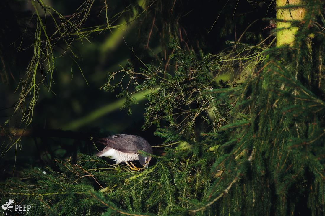 https://img.ewelt.org/pics/upashi/Tiere/Birds/2018/20180324_072328_X-T2_2440-Edit.jpg