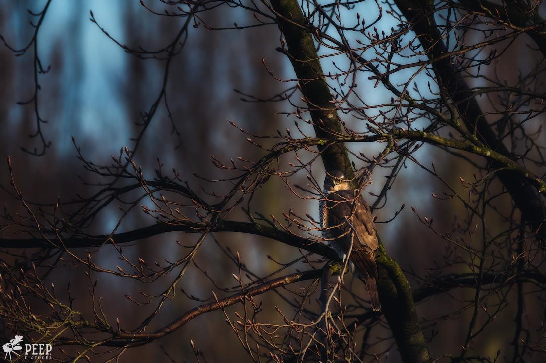 https://img.ewelt.org/pics/upashi/Tiere/Birds/2018/20180324_072422_X-T2_2454.jpg