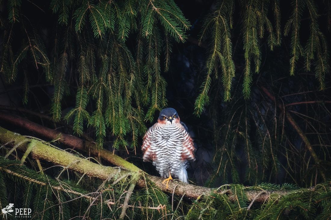 https://img.ewelt.org/pics/upashi/Tiere/Birds/2018/20180325_073905_X-T2_2499-Edit.jpg