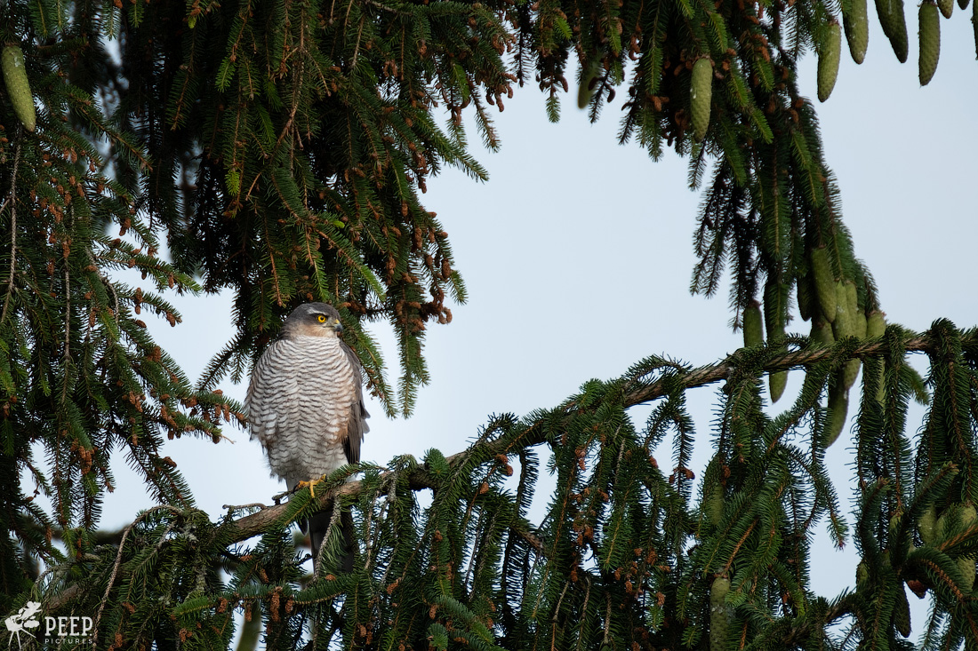 https://img.ewelt.org/pics/upashi/Tiere/Birds/2018/20180612_081156_X-T2_5654.jpg