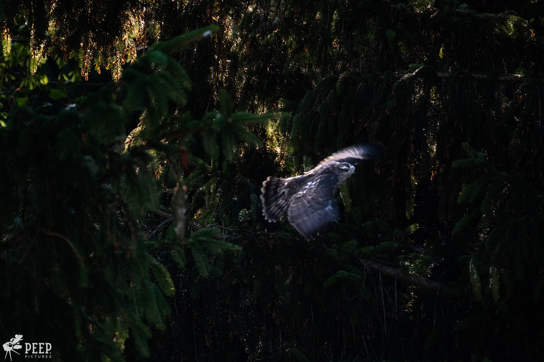 https://img.ewelt.org/pics/upashi/Tiere/Birds/2018/20180626_192615_X-T2_5968-Edit.jpg