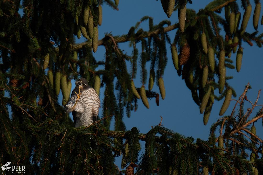 https://img.ewelt.org/pics/upashi/Tiere/Birds/2018/20180627_075348_X-T2_6130.jpg